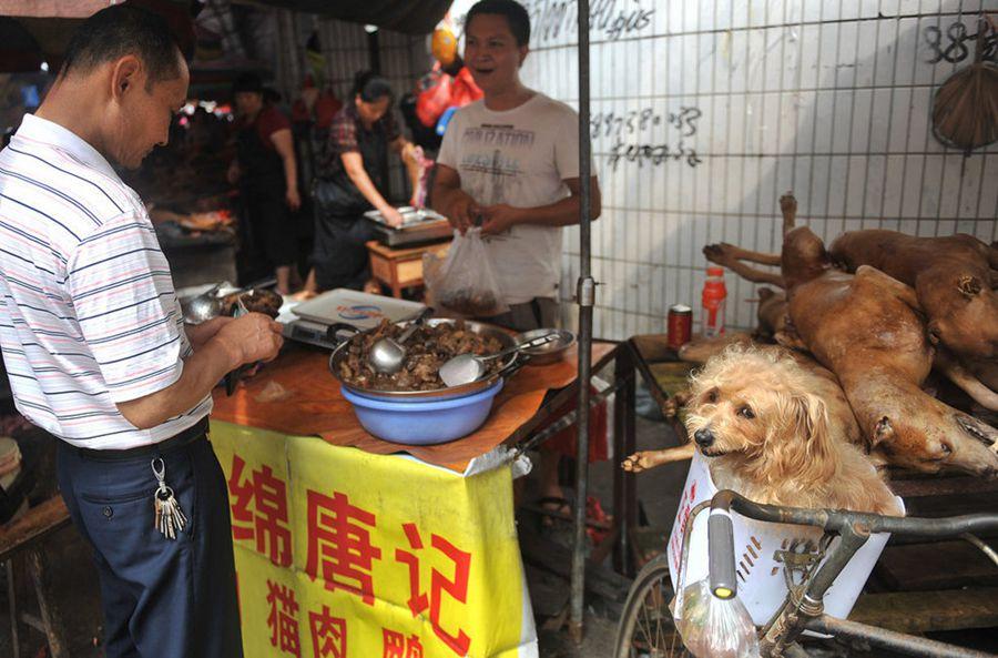 Dog Food That Tastes Like Cat Food