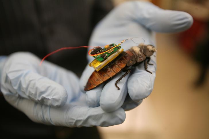 Cockroach remote control.jpg