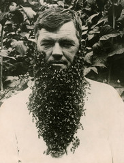 nga-bee-beard.jpg