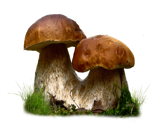 mushroom_png_by_moonglowlilly-d67ot4w.png