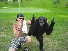 monkey_middle_finger_20100104_1363225097.jpg