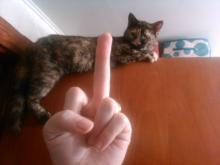 gato9.jpg