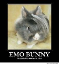 emo-bunny-nobody-understands-him.jpg