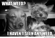 what-weed-meme.jpg