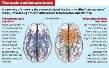 differences-male-female-brain.jpg