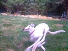 fast dog.jpg
