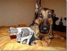 Dog-with-Gun-300x226.jpg