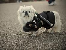 dog-ninja.jpg